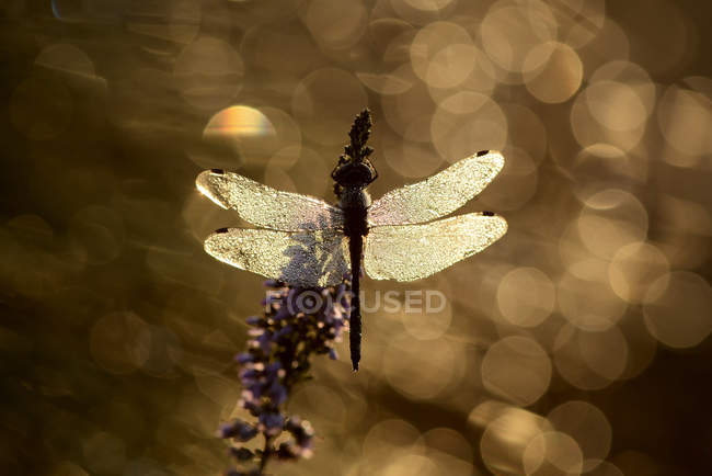 Dragonfly on blooming plant — Stock Photo
