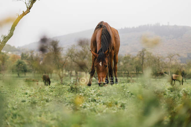 Horses grazing on a meadow, natural landscape on background — Stock Photo