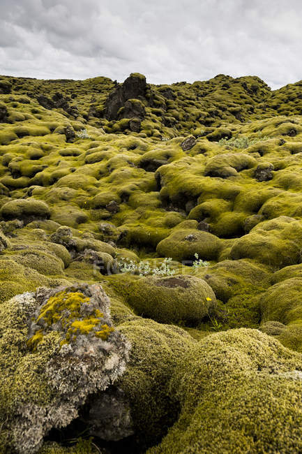 Iceland, Skaftareldahraun, Lava field  during daytime — Stock Photo