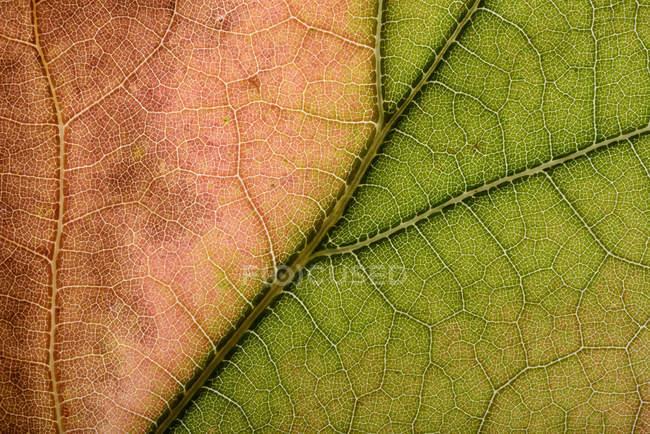 Часть осеннего кленового листа, полная рамка — стоковое фото