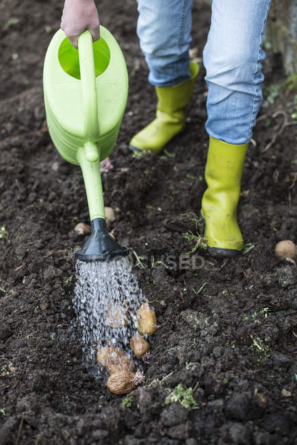 Woman Watering potatoes with watering can in vegetable garden — Stock Photo