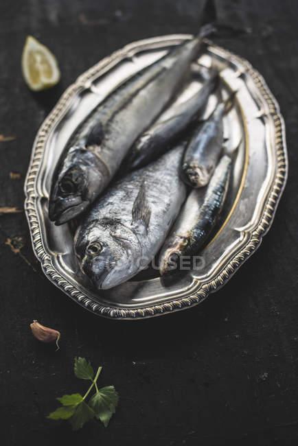 Closeup on raw fish, sea bream, sea bass, mackerel and sardines on dark wooden surface — Stock Photo