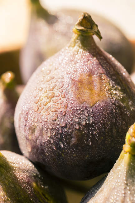 Fresh fig with drops of water — Stock Photo
