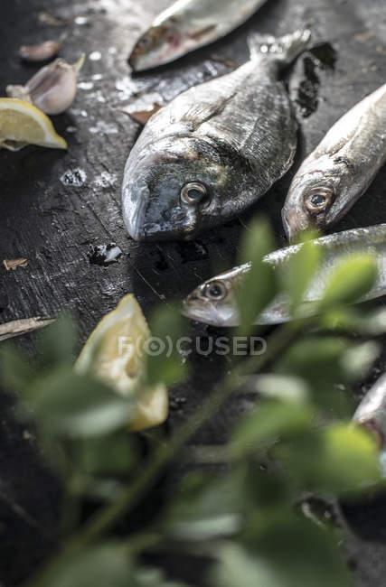 Primo piano sul pesce crudo, orata, branzino, sgombro e le sardine su superficie di legno scuro — Foto stock
