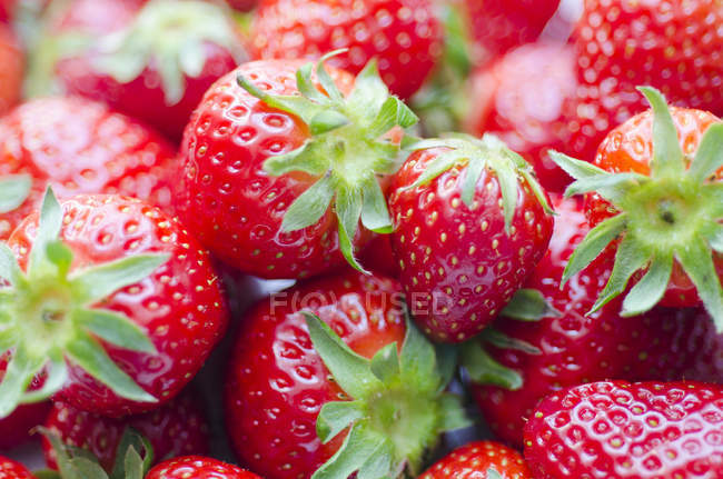 Close-up of fresh ripe Strawberries in heap — Stock Photo