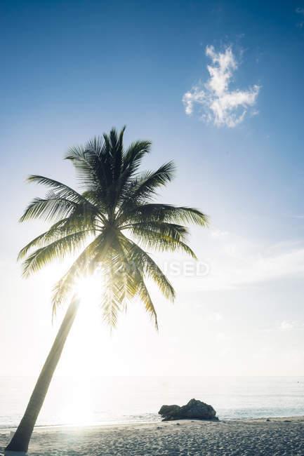 Мальдив, атолл Ари, вид на пальму на пляже — стоковое фото