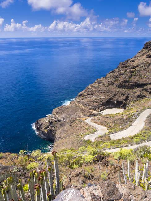 Espanha, Ilhas Canárias, La Palma, Tijarafe, Canárias ilha Spurge crescendo na costa rochosa — Fotografia de Stock