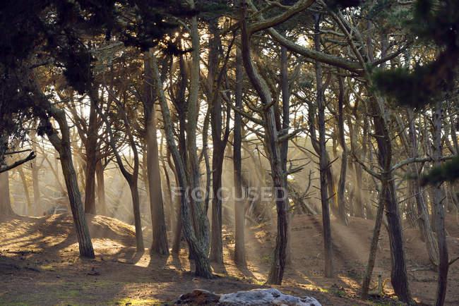 USA, California, San Francisco, sunbeams falling through trees near Baker Beach — Stock Photo