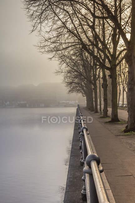 Германия, Гамбург, деревья и тротуар рядом с туманным озером Альстер — стоковое фото