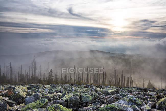 Alemanha, Bavaria, Lusen, Parque Nacional da floresta da Baviera, dieback florestal e nevoeiro no outono — Fotografia de Stock