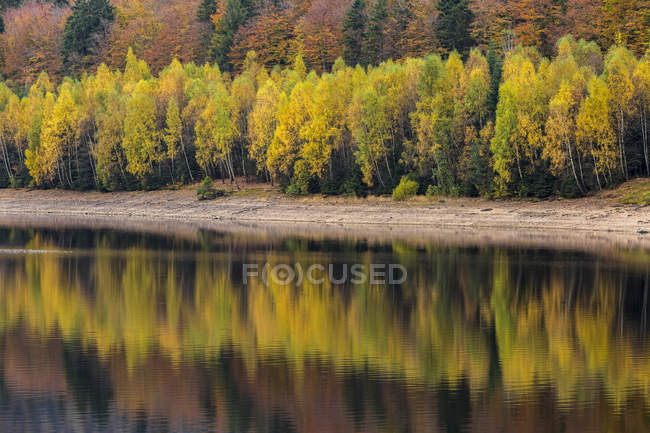 Germany, Bavaria, Bavarian Forest National Park, drinking water reservoir Frauenau in autumn — Stock Photo