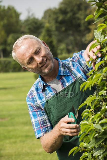Portrait of gardener pruning plants in a park — Stock Photo