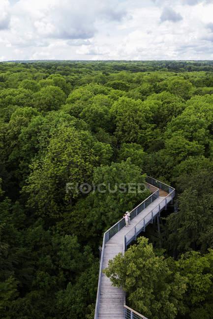 Germany, Thuringia, Hainich, canopy walkway Hainich — Stock Photo