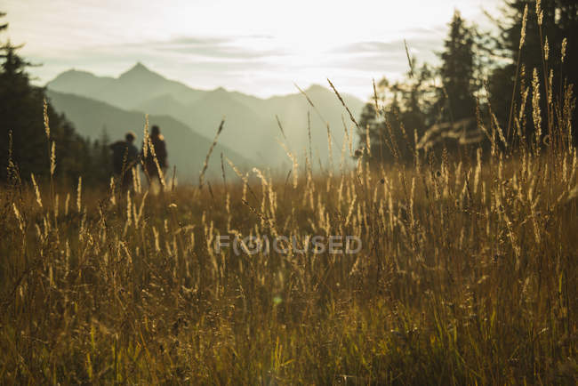 Austria, Tyrol, Tannheimer Tal, tall grass in sunlight on alpine meadow and hills on background — Stock Photo