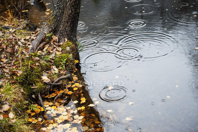 Raindrops falling on water during daytime — Stock Photo