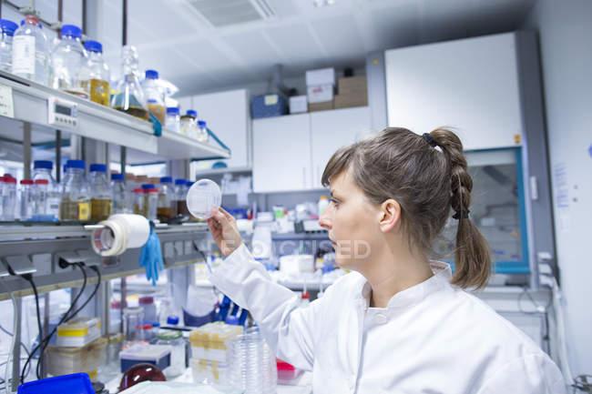 Jovem cientista natural feminina, trabalhando no laboratório biológico — Fotografia de Stock