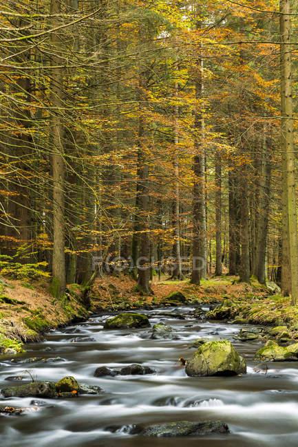 Deutschland, Bayern, Nationalpark Bayerischer Wald, Kleiner Fluss Regen in der Nähe von Frauenau im Herbst — Stockfoto
