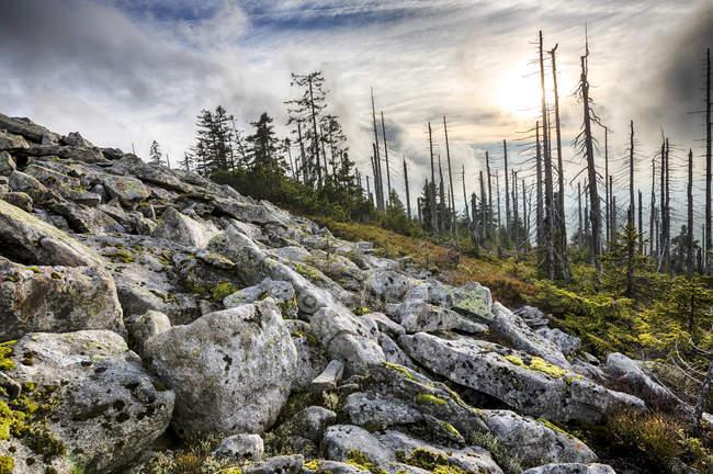 Allemagne, Bavière, Lusen, Parc National de forêt bavaroise, dépérissement de la forêt en automne — Photo de stock