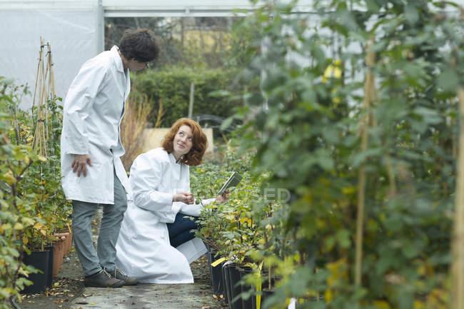Deux femmes scientifiques contrôlant des plantes dans une serre — Photo de stock