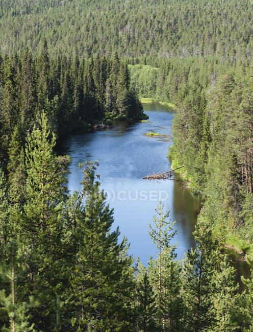 Финляндия, Лапландии, Куусамо, Оуланкайоки Национальный парк, река Оуланкайоки с сосновым лесом — стоковое фото