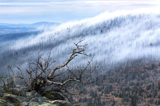 Alemanha, Bavaria, Lusen, Parque Nacional da floresta da Baviera, destruída floresta e nevoeiro — Fotografia de Stock