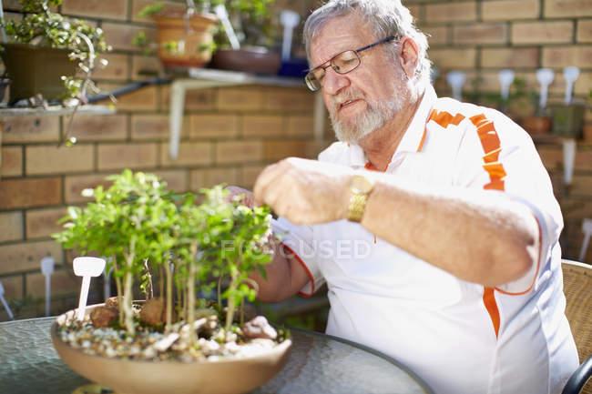 Senior man caring for plant — Stock Photo