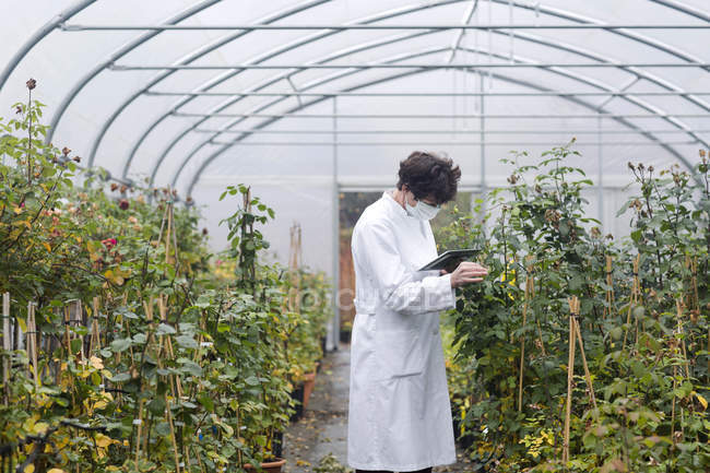 Scientist with digital tablet examining plants in greenhouse — Stock Photo