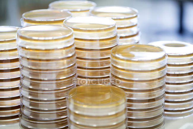 Stacks of petri dishes in a laboratory — Stock Photo