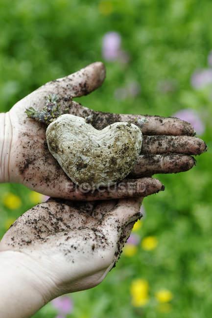 Woman's hands holding heart shaped potao — Stock Photo