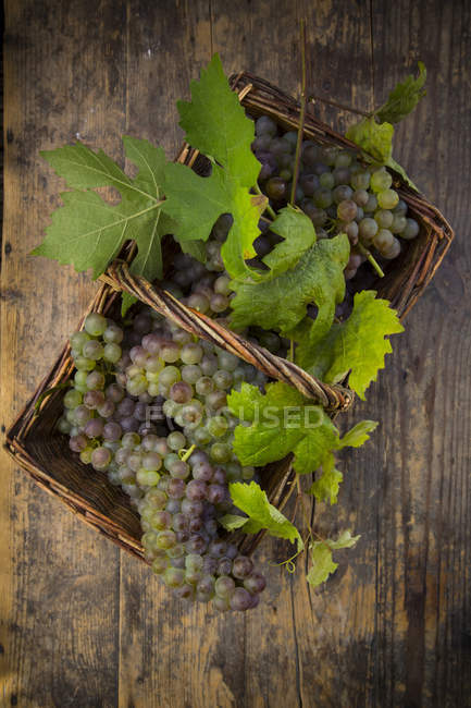 Wicker basket of grapes and vine leaves on dark wood — Stock Photo