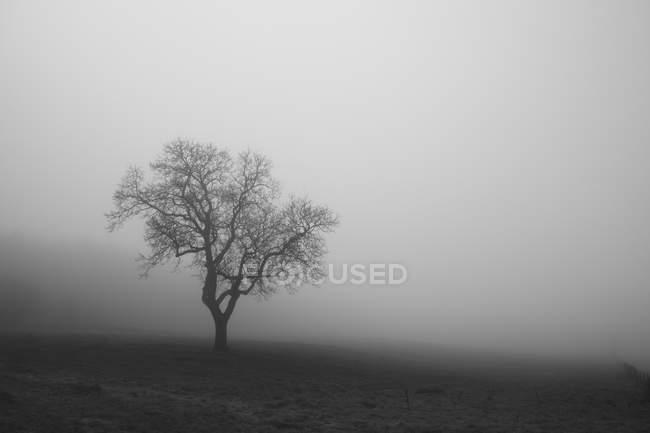 Belgique, Hautes tourterelles, vue sur le brouillard — Photo de stock