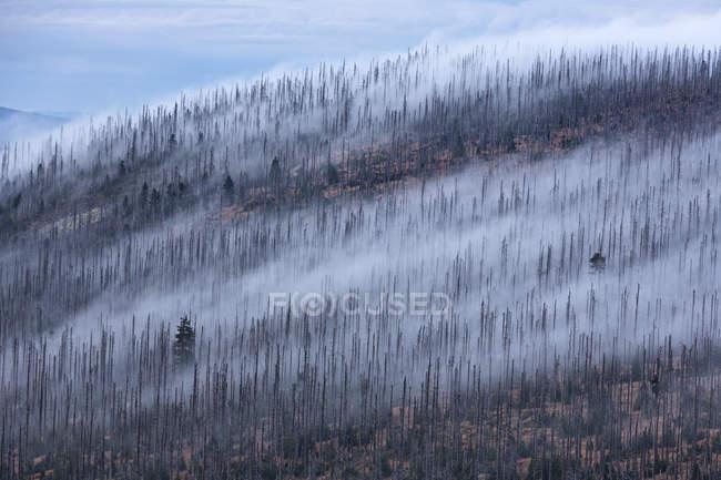 Германия, Бавария, Lusen, национального парка Баварский лес, гибель лесов и тумана в осень — стоковое фото