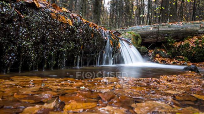 Steinbachl chute d'eau en forêt automnale — Photo de stock