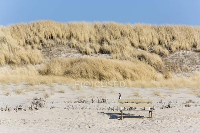 Німеччина, спогади про Шлезвіг-Гольштейн Зільт, лавки на dune денний час — стокове фото