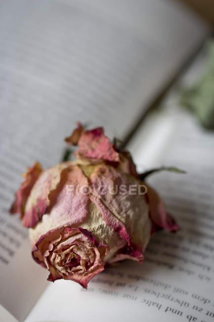 Сушеная роза закроется на открытой книжке — стоковое фото