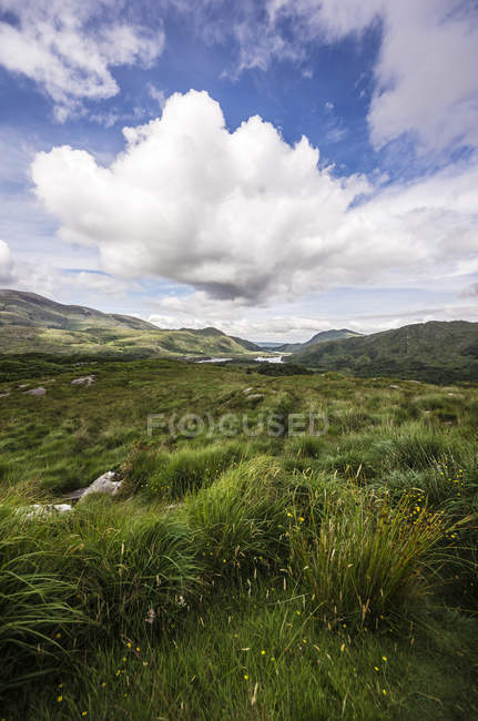 Ireland, Ring of Kerry, Upper Lake, Derrycunihy Wood during daytime — Stock Photo