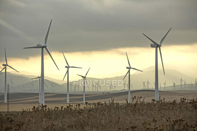 Spain, Andalusia, Tarifa, Scenic landscape with wind farm on field, hills on background in golden light — Stock Photo