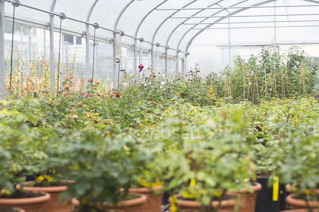 Daytime view of different plants in a greenhouse — Stock Photo
