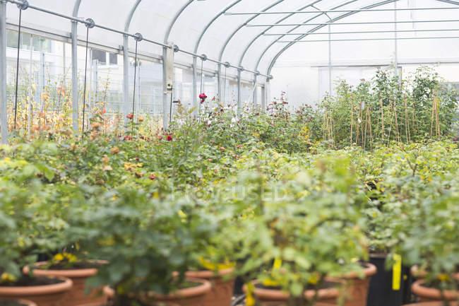 Денного зору різних рослин в теплиці — стокове фото
