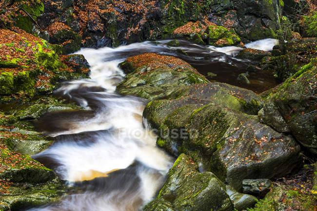 Германия, Национальный парк Баварский лес, ущелье Штайнбах осенью — стоковое фото