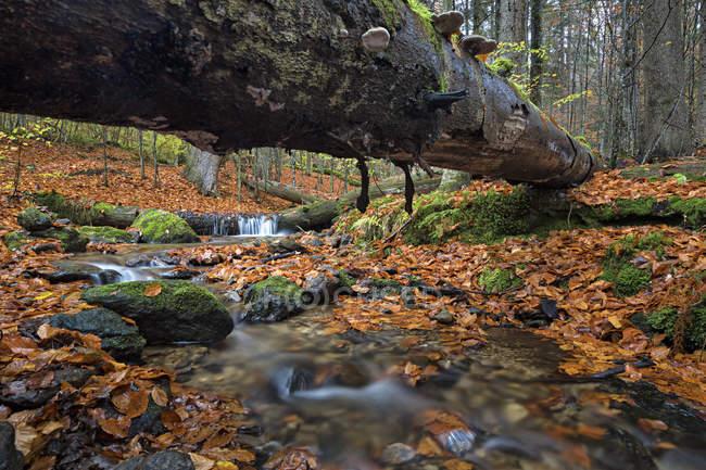 Германия, Бавария, национального парка Баварский лес, ручей Гроссер Steinbach — стоковое фото