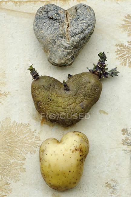 Drei verschiedene herzförmige Kartoffeln hintereinander — Stockfoto