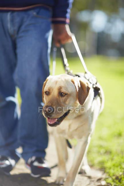 Porträt der Blindenhund mit Besitzer — Stockfoto