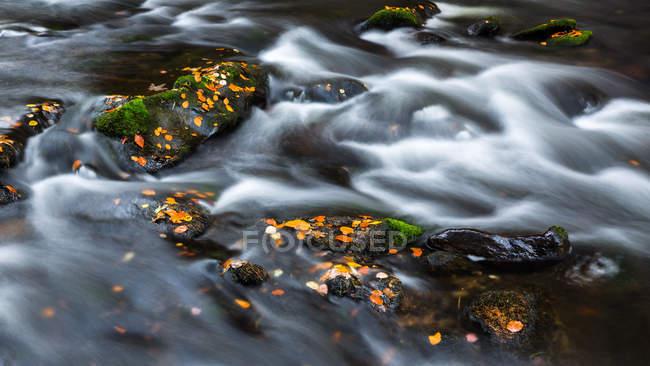 Parc National de forêt bavaroise, rivière Regen Grosser en automne, Allemagne — Photo de stock