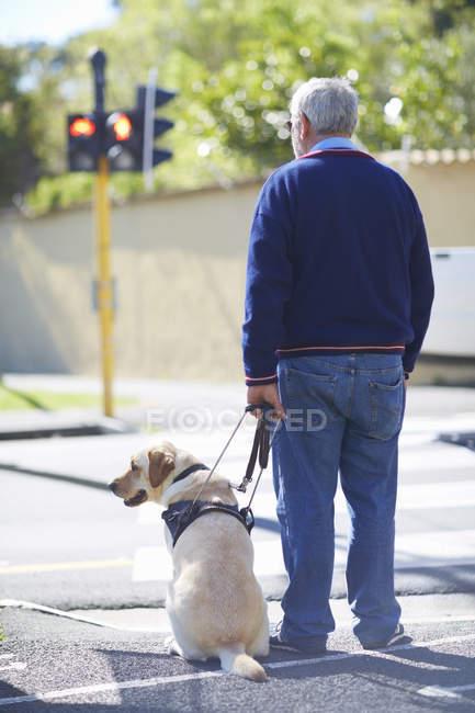 Homme malvoyant qui attend avec son chien-guide à la lumière piétonne — Photo de stock