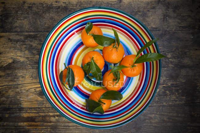 Вид сверху на красочные мандарины с листьями в чаше — стоковое фото