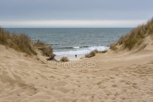 Germany, Schleswig-Holstein, Sylt, marram grass on sandy beach — Stock Photo