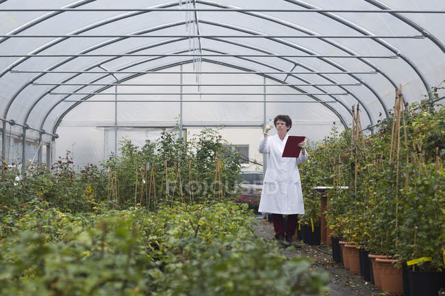Female Scientist examining plants in greenhouse — Stock Photo