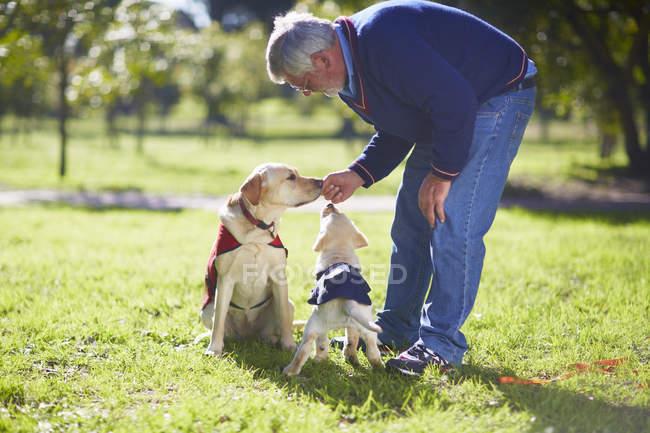 Homem de formação dois cães-guia no gramado — Fotografia de Stock