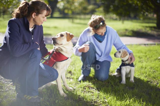 Frauen training zwei Blindenhunde auf Wiese — Stockfoto